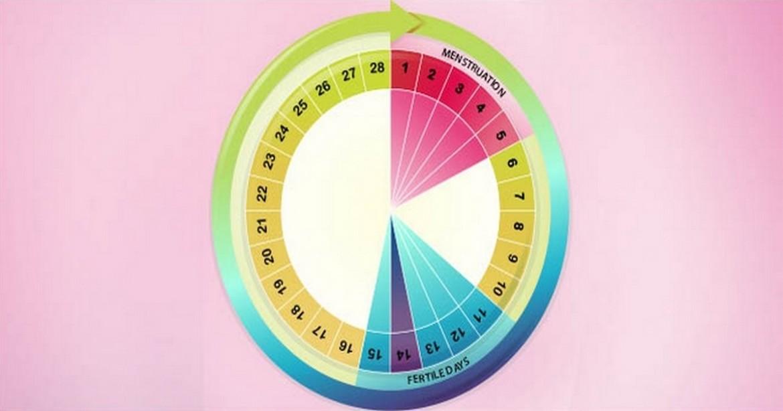 cykl menstruacyjny.en fb